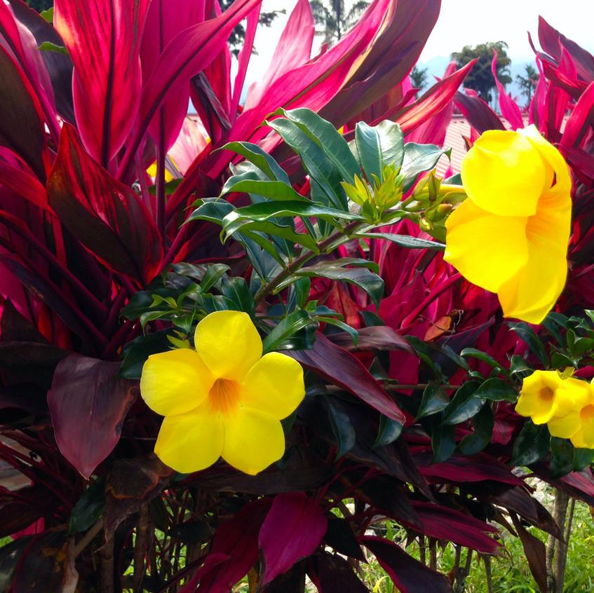 st lukes pretty flower