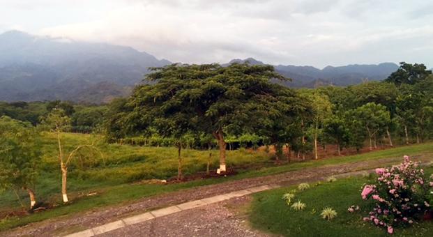 mimosa tree bethany