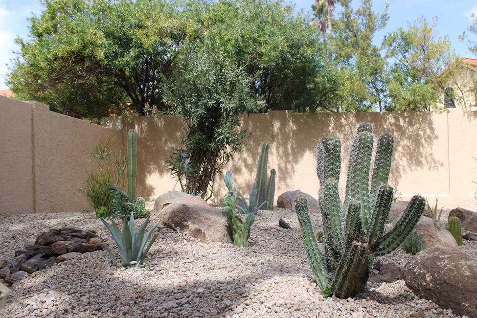 Xeriscape Desert Plants Landscape