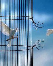 jpg_oiseaux_cage_cassee.jpg