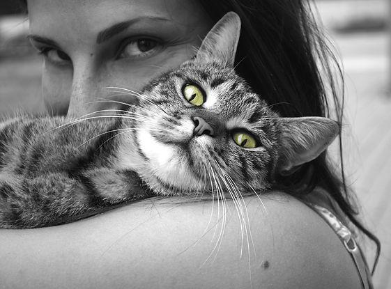 animals-617305_1920.jpg