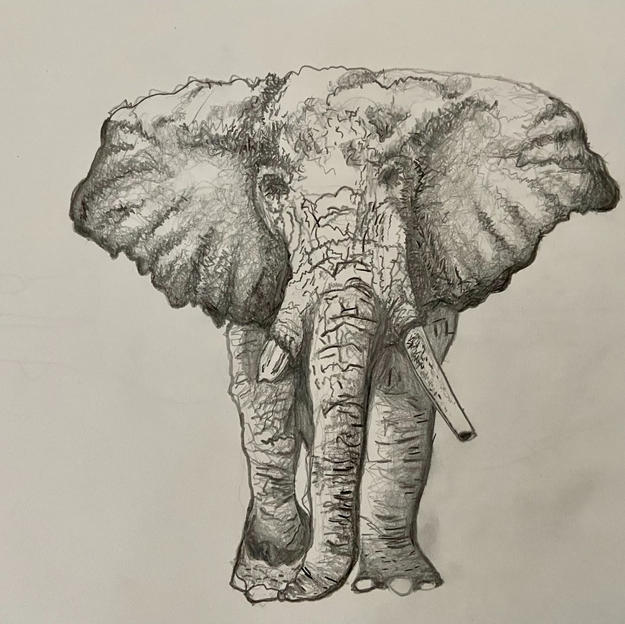 Elephant Sketch with Pencil