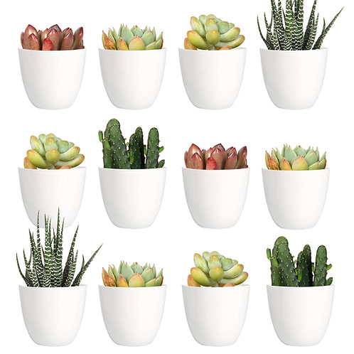 Youngever 24 Pack 2 Inch Mini Plastic Planters Indoor Flower Plant Pots, white