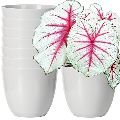 Youngever 7 Pack 6.5 Inch Plastic Planters Indoor Flower Plant Pots, Modern
