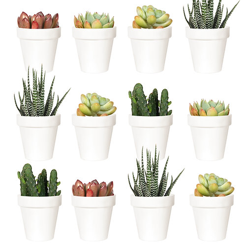Youngever 24 Pack 2 Inch Mini Plastic Planters, Indoor Flower Plant Pots, white