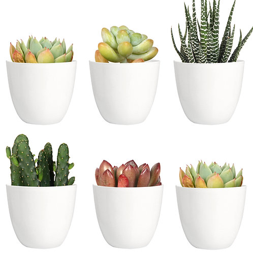Youngever 10 Pack 3 Inch Mini Plastic Planters Indoor Flower Plant Pots, white
