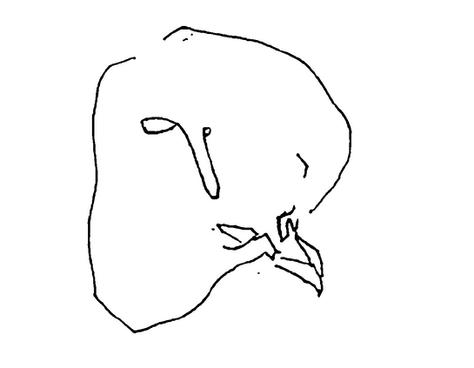 羽化 eclosion