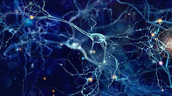 neurons_170601825.jpeg