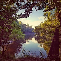Piney woods swamp.jpg