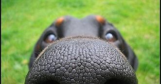 close up dog.jpg