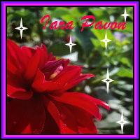 Iara's Icon.jpg