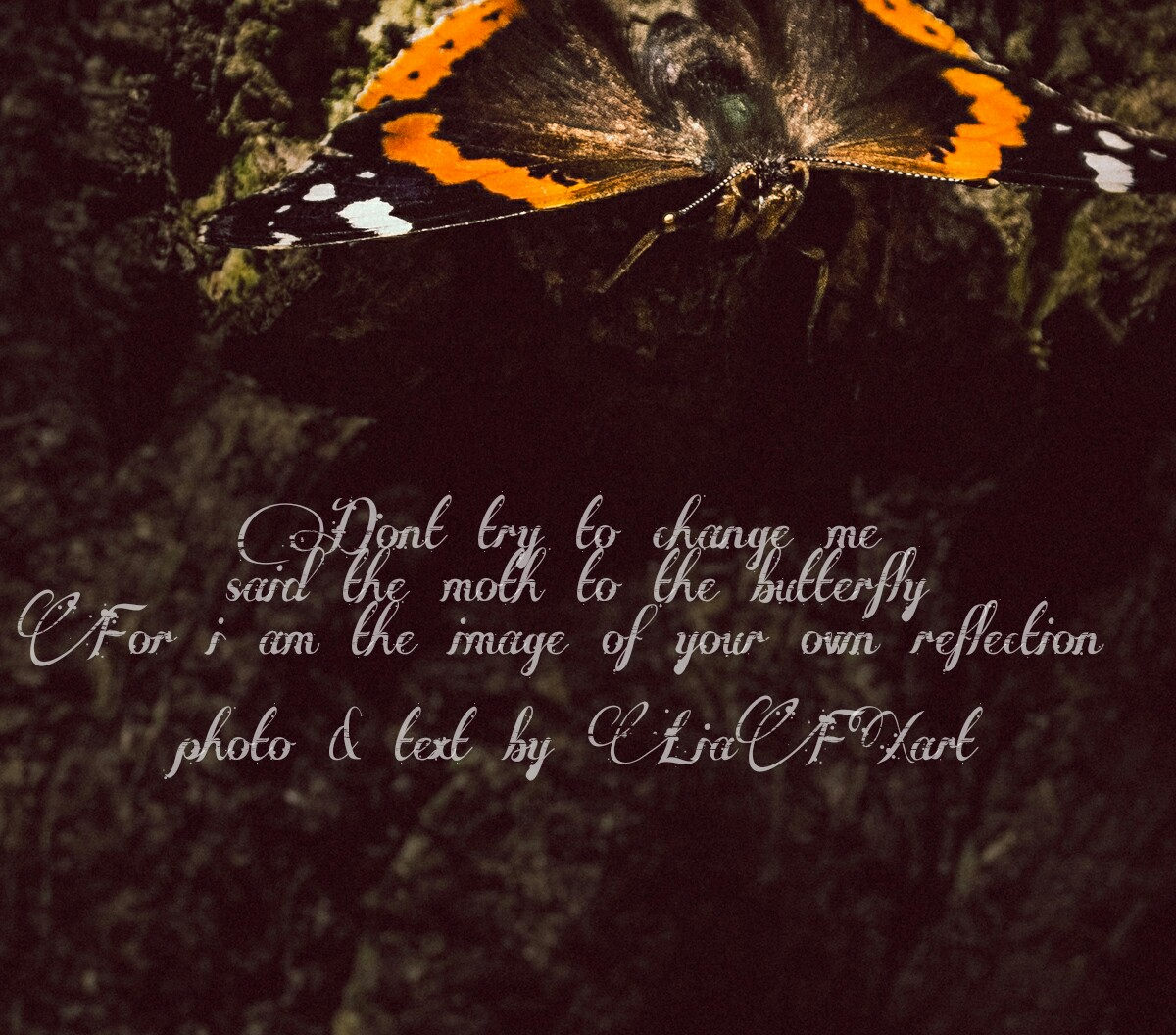 The Moth & The Butterfly