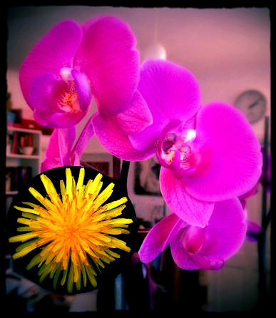 On Dandelions and Orchids