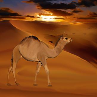 leroy camel.jpg