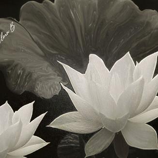my flower.jpg