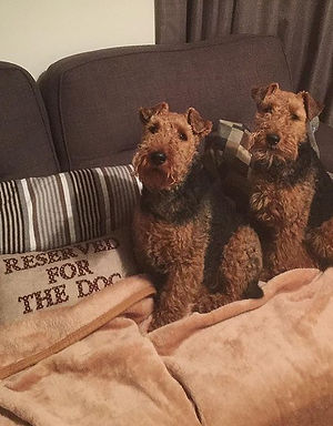 Reserved For Terri & Lili 🐶🖤🐶