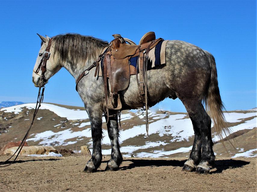 Grey horse (2).JPG