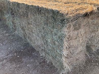 Tef grass 2.jpeg
