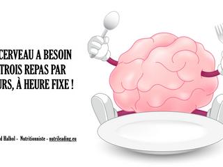 Le cerveau a besoin de 3 repas / J