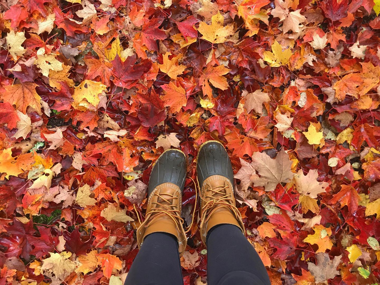 A Vibrant Fall