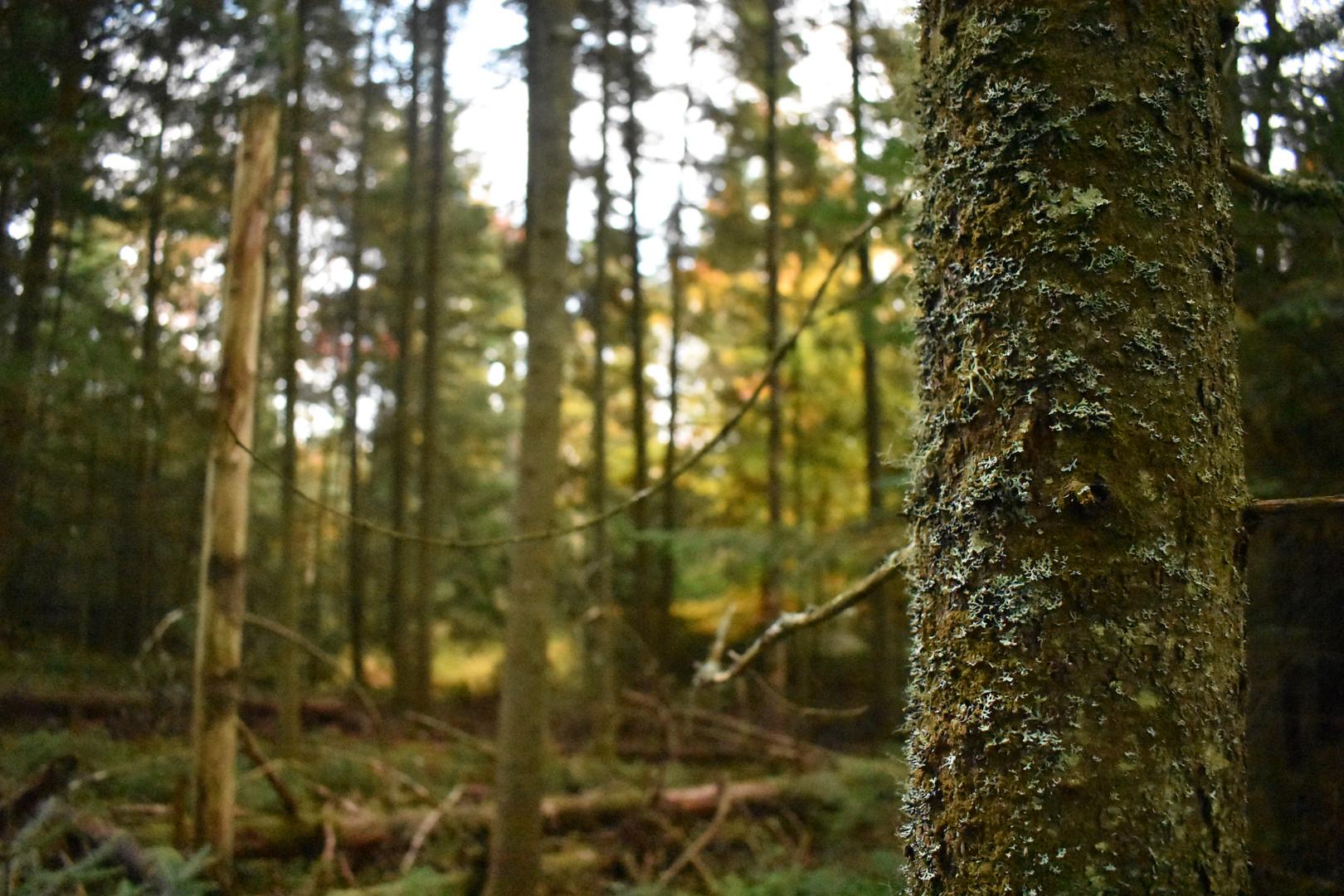 The Bloomingdale Wilderness