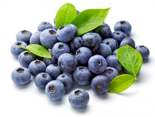 Blueberry extract could help fight gum disease and reduce antibiotic use