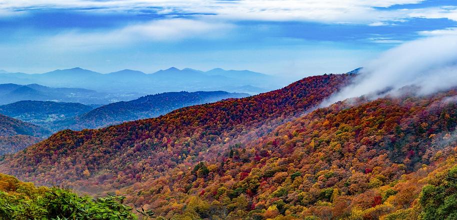 Smoky Mountains Wolf Premium Oil