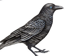 Crow drawing for heat transfer