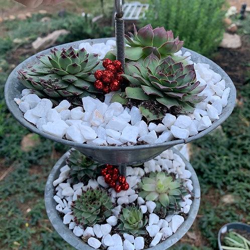 Antique bird feeder with succulents