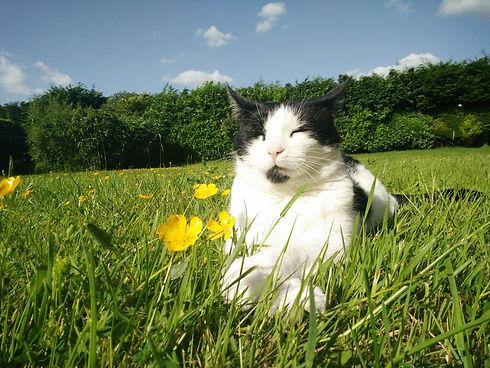 shauns cat.jpg
