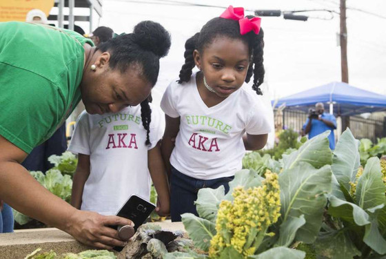 Sorority dedicates community garden in Houston's Third Ward