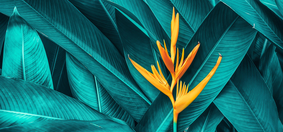 colorful flower on dark tropical foliage