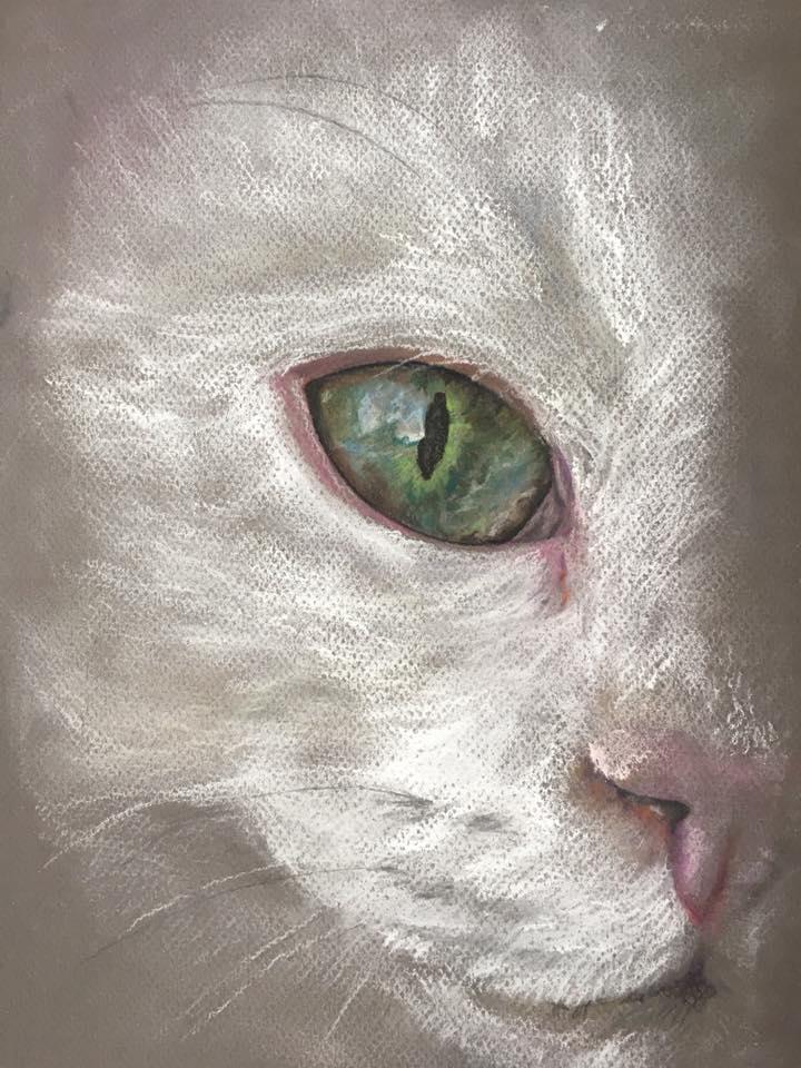 Kissansilmä A4