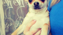 Фотографии домашних животных подписчиков