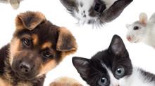 Акция во Всемирный день домашних животных. Присоединяйтесь!