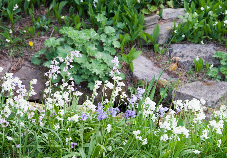 Spring garden -20.jpg