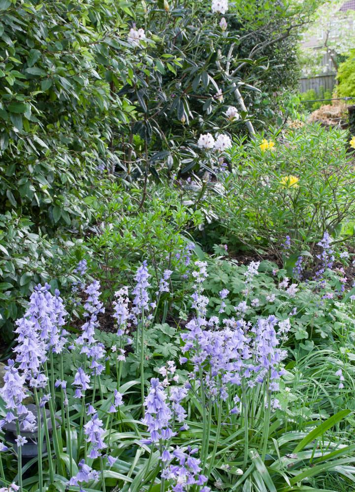 Spring garden -18.jpg