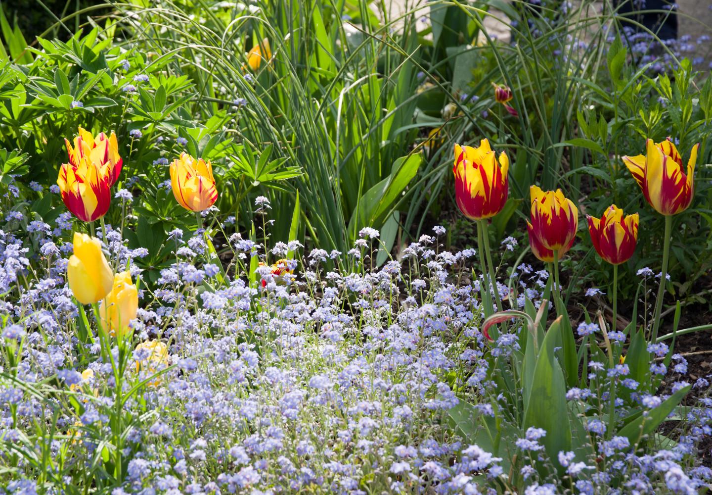 Spring garden -21.jpg