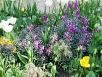 Spring garden -09.jpg