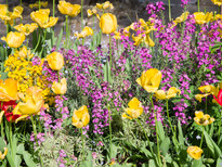 Spring garden -19.jpg