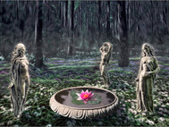 The Enchanted Glade