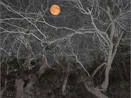 Tanglewood Moon