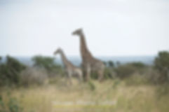 Kruger-Photo-Safari285.jpg