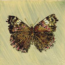Butterfly4_edited.jpg
