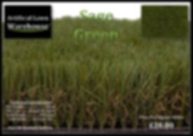 Sage Green 1.jpg