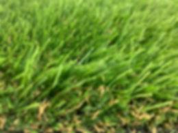 Glade emerald 3.jpg