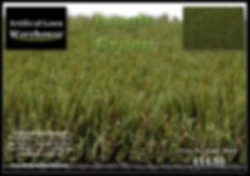Jungle Green 1.jpg