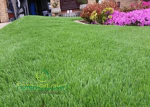 Artifcial Lawn Sheffield