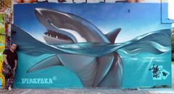 Shark-Brézillet