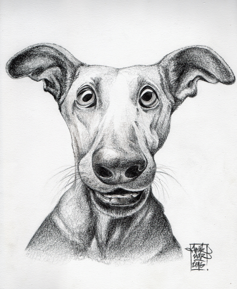 Portrait chien zinzin